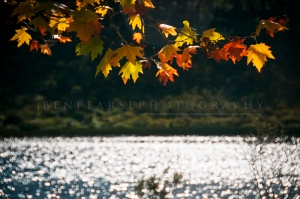 Autumn glory on the lake