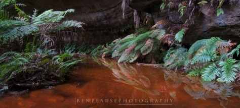 Reflections of a fern