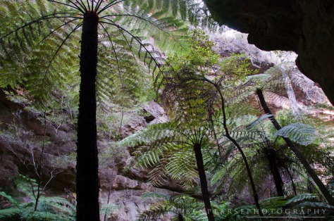 ferns reaching for light