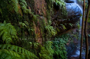 Moss covered walls