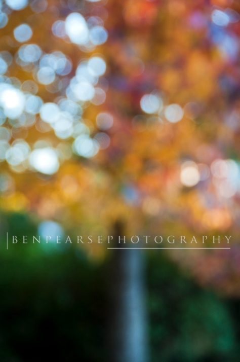 blurred autumn