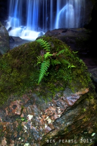 ferns and falls