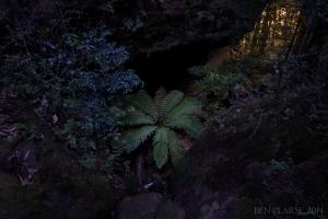 fern monsters lair