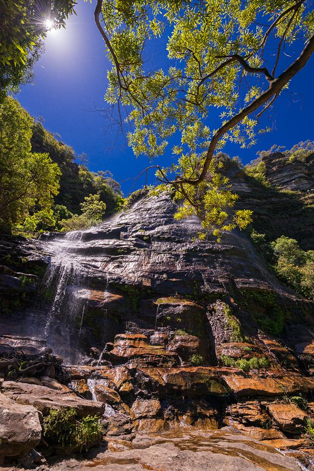 Blue Mountains Summertime