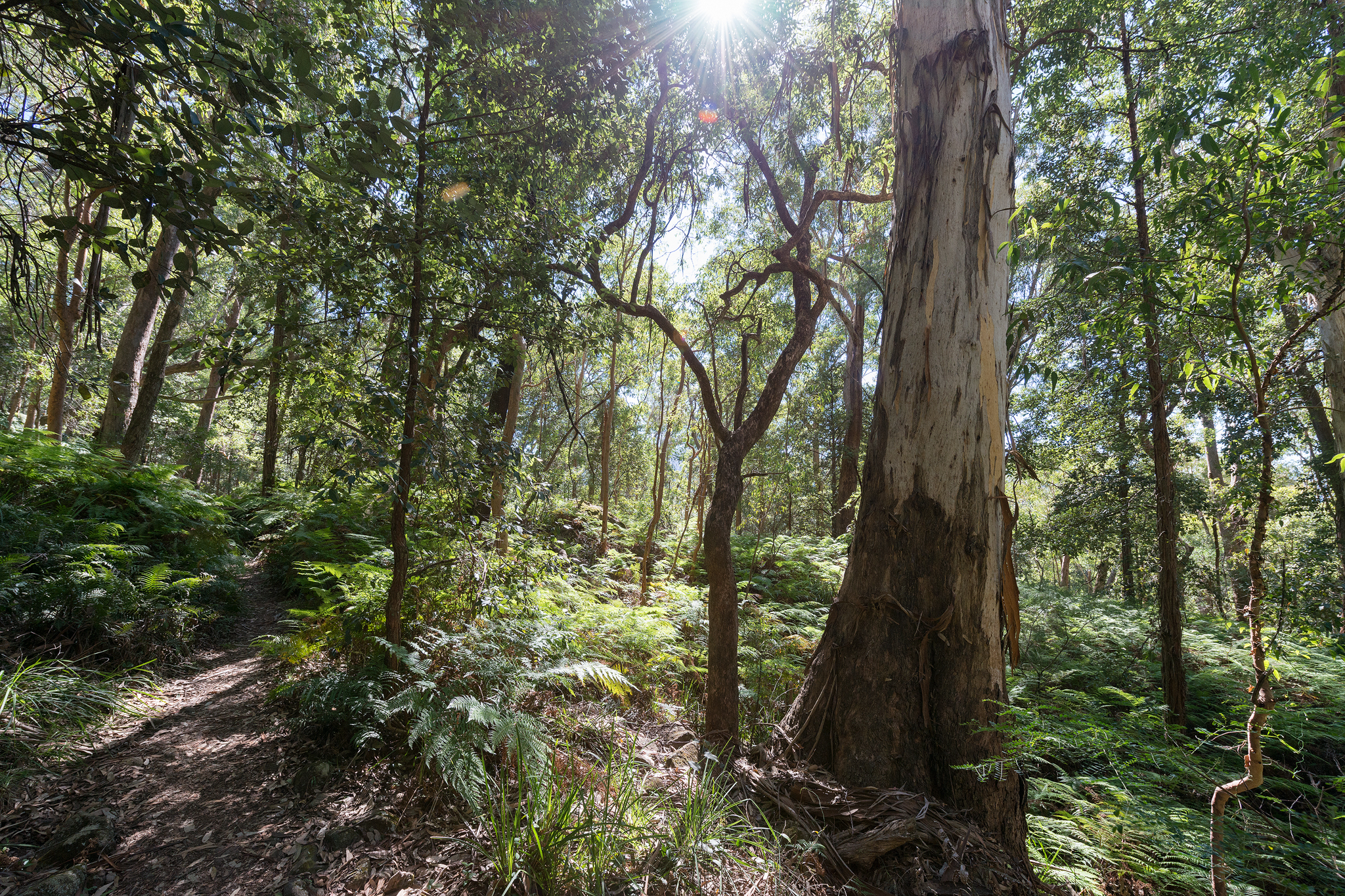 Forest in sunlight- april 2016- 2048