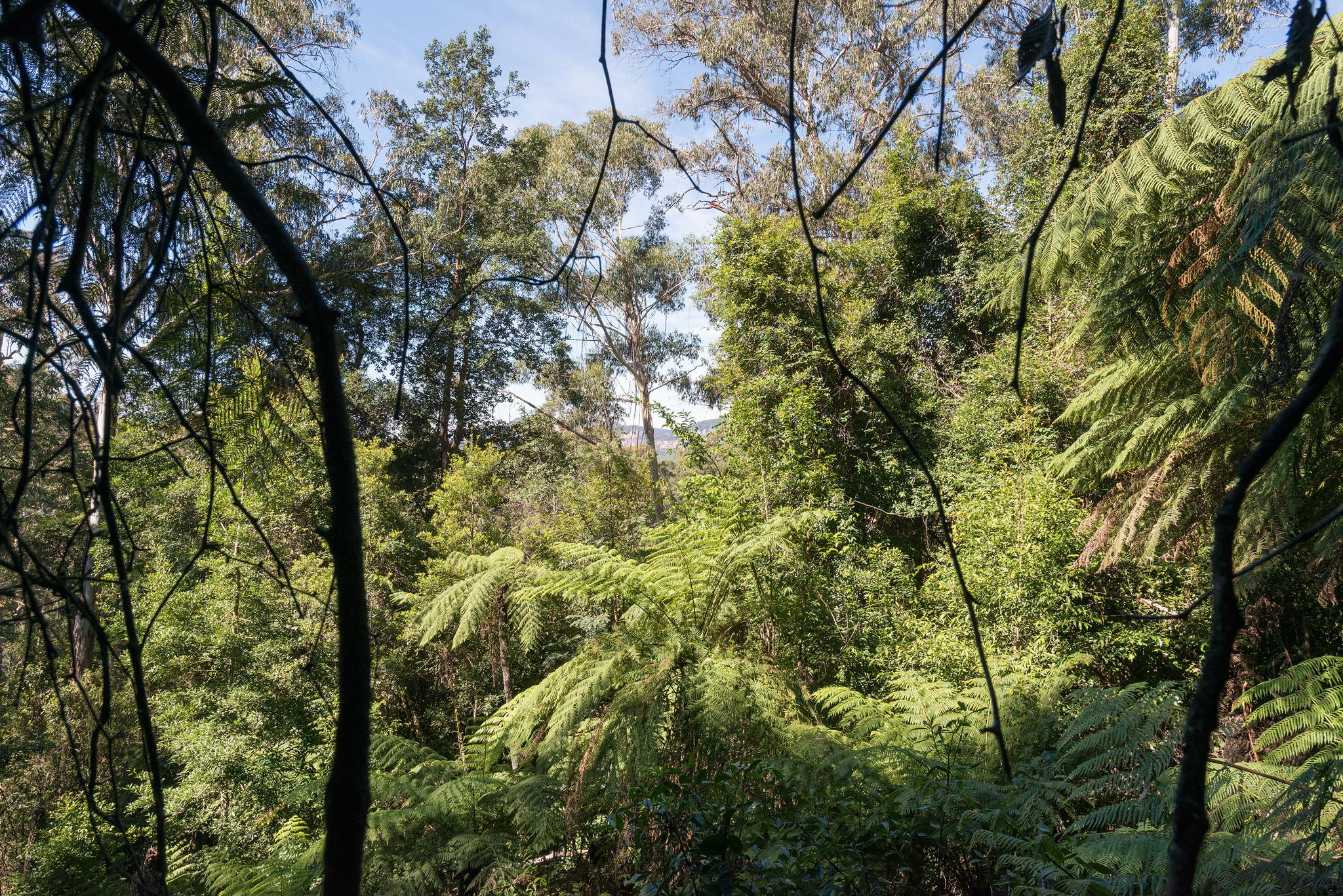 Forest views- april 2016