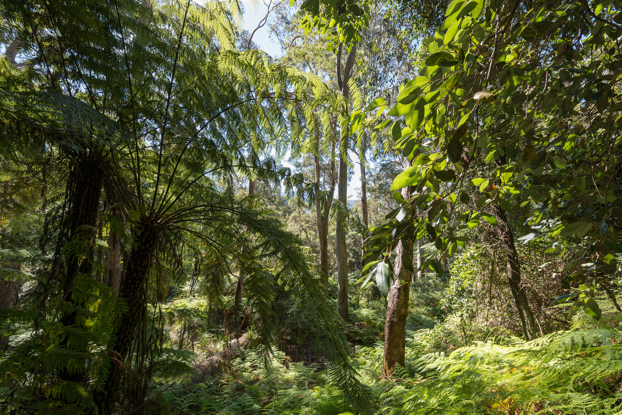 Lush forests- april 2016- 2048