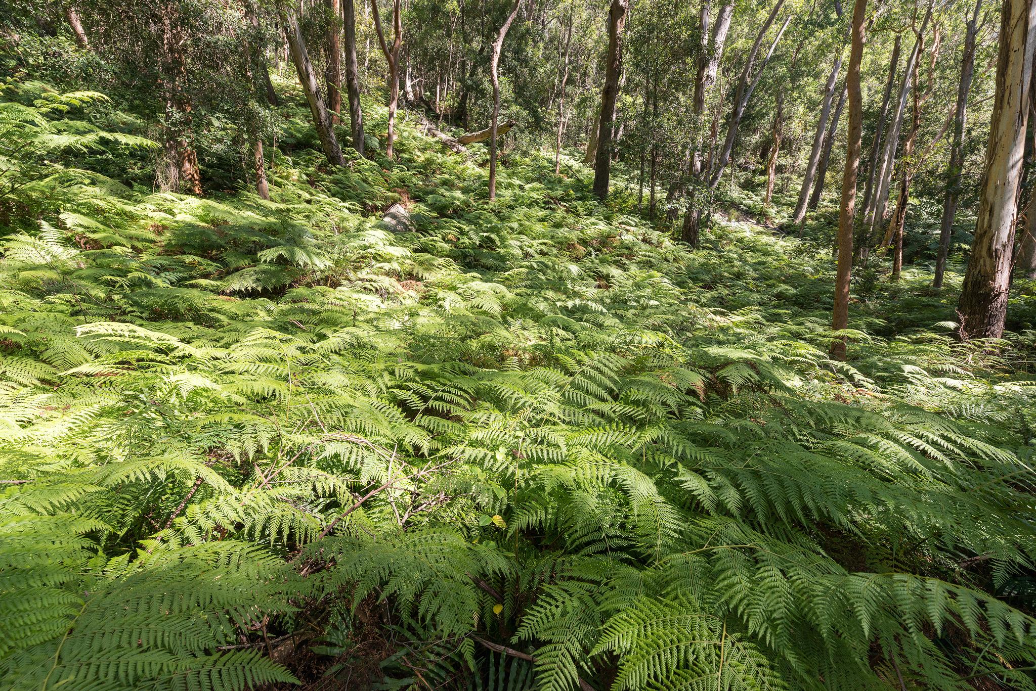 Sea of ferns- 2048