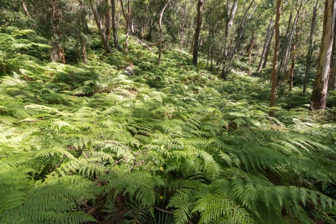 Sea of ferns- 2048