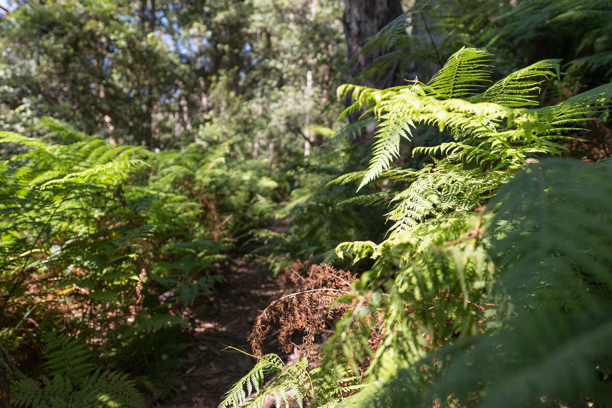 Track between ferns- 2048