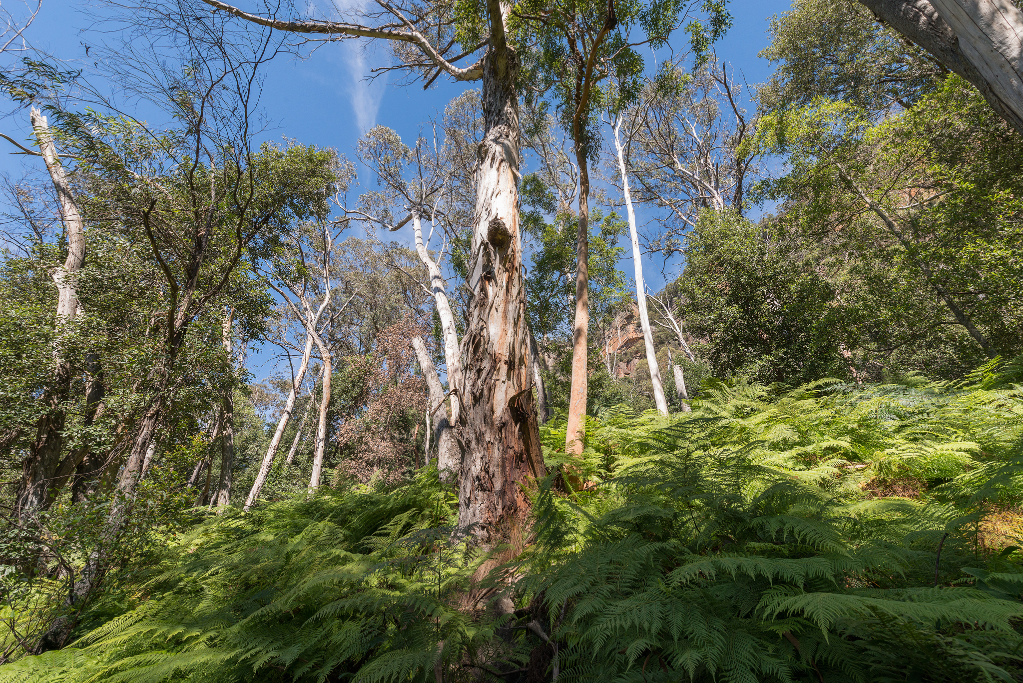 Trees amongst the ferns- april 2016- 2048