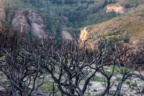 narrowneck plateau, Katoomba